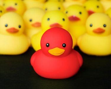 Foto de patos de goma. todos son amarillos pero hay uno rojo.