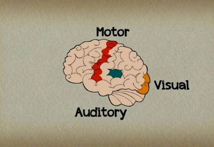 las capacidades del cerebro que se activan al tocar música