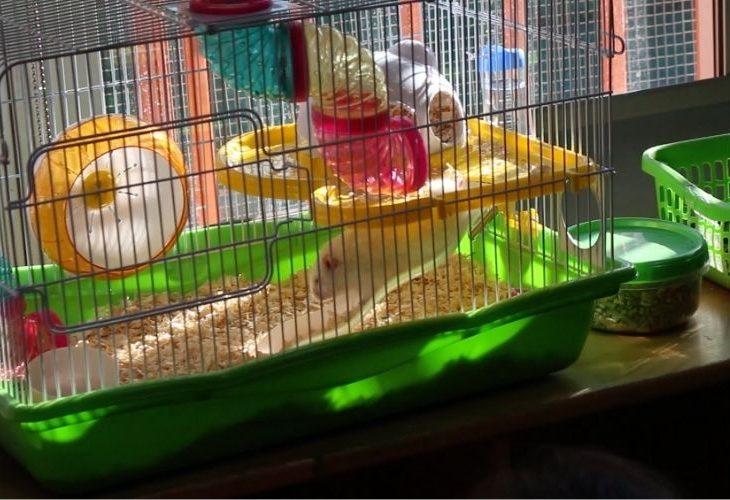 Mascota (hamster) Jardín Infantil y Sala Cuna Ingeniero Luis Falcone