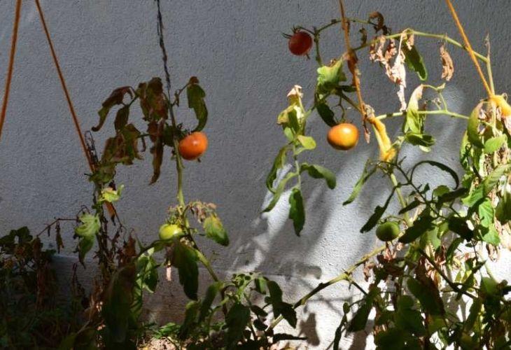 Huerta del jardín