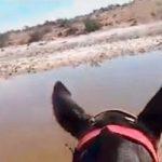 """""""Nunca falta a clase"""": la profesora del niño que viaja a caballo hacia su escuela"""