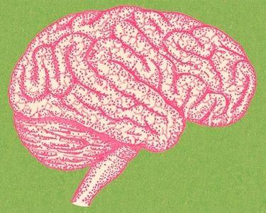 Ilustración del cerebro y sus conexiones neuronales