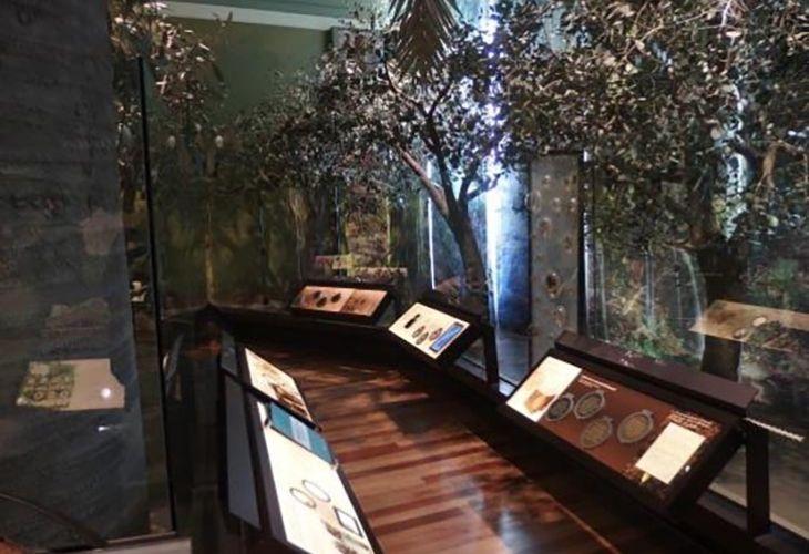 Museo Historia Natural Valparaíso