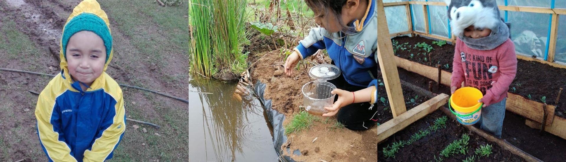 Foto de 3 niños en distinta actividades cotidianas en la región de los ríos. Desde alimentar peces, trabajar en una huerta y recoger los huevos de las gallinas. Fotos cortesía de Junji.