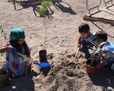 Fotografía de 3 estudiantes del jardín infantil blanca nieves, sembrando algunos árboles en las tierras áridas de su jardín