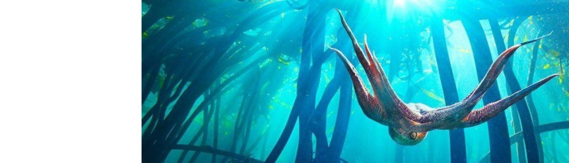 En la imagen se ve una escena del documental donde un pulpo hembra está nadando entre algas